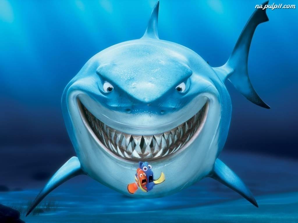 Znalezione obrazy dla zapytania rekin